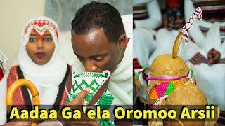 ARSI OROMO WEDDING RECEPTION