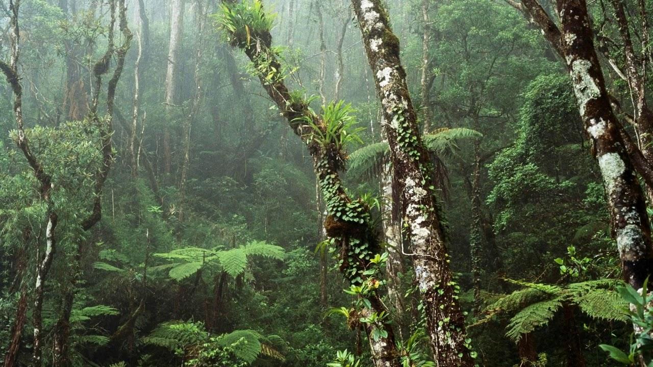 Rain Woods Aesthetic