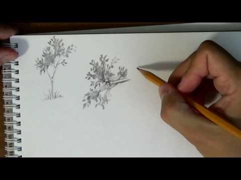 Как нарисовать листву на деревьях карандашом