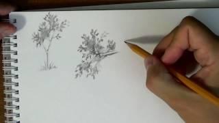 Основы рисунка. Часть 16 - как быстро и просто рисовать листья деревьев(Вот мы и добрались до элементов пейзажа. В этом видео я покажу один и самых простых способов имитировать..., 2016-10-19T13:00:03.000Z)