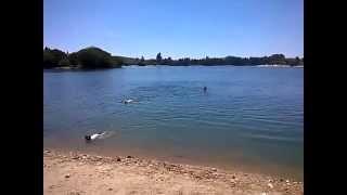 Nacho, Luna y Jazz nadan en el Pantano del Ebro