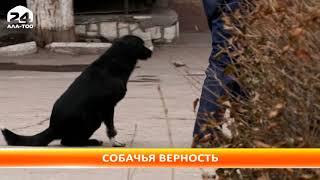 В Бишкеке появился свой Хатико