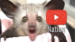 The 7 Craziest Animals on Earth | YouTube Nation | Saturday
