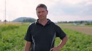 Daniel Vetterli - Kraut und Knollenfäule
