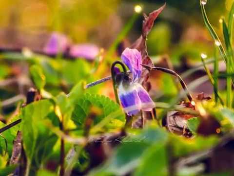 Цветы обои Full HD 1080p , фото, картинки 1920x1080 на