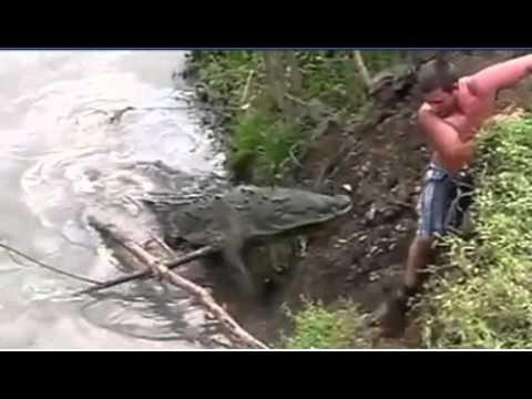 ataques de tiburones/cocodrilos a personas en vivo 2018 thumbnail