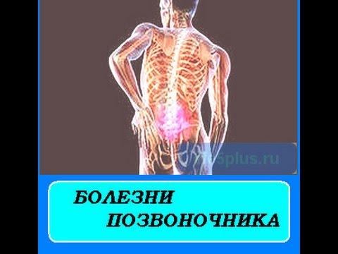 Анатомия : Кости голени. Большеберцовая кость.
