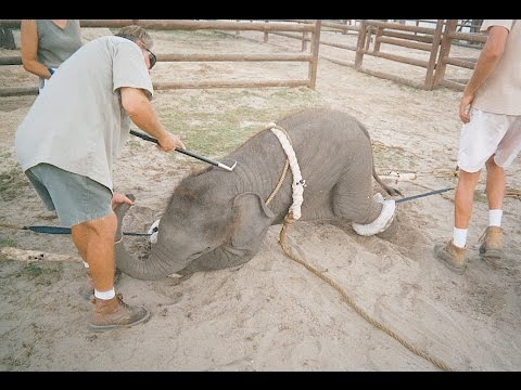 Ringling Bros.' Elephants Deserve Better Than Ringling