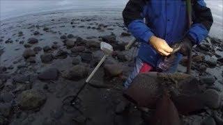 Beach Metal Detecting old rings
