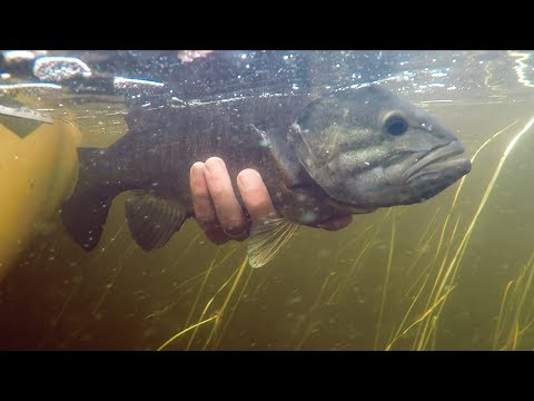 Best Smallmouth Bass Fishing Patterns From Canada