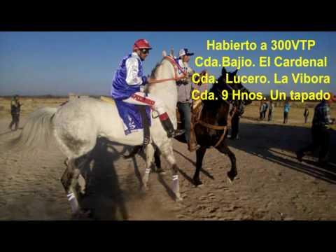 El Cardenal de Mimbres Vs Tapado Vs Vivora. Habierto Azogueros 02/03/17