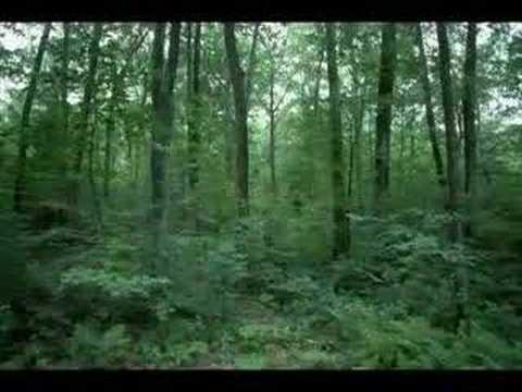 Untsakad  Mehed metsas