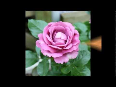 Love Song Medley  -  Band of Oz