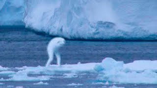 5 Mysterious Creatures Caught on Camera