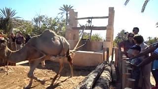 Джерба, Тунис. Экскурсия Июль 2017 Дом султана. Djerba, Tunisia