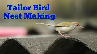 vuclip Engineer Bird | Common Tailor Bird Nest Making | How Tailor Bird Make Nest | India