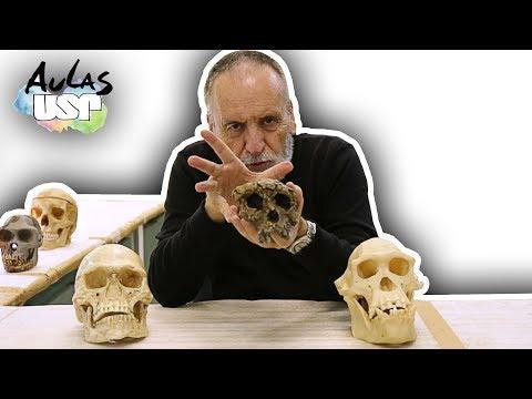 A Saga da Humanidade -- Aula 6 (Australophitecus afarensis)