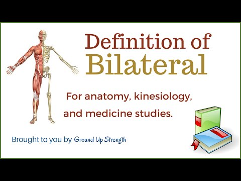 Attractive What Does Bilateral Mean In Anatomy Collection - Image of ...