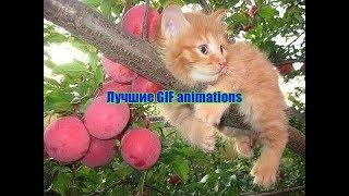Лучшие GIF animations  в интернете