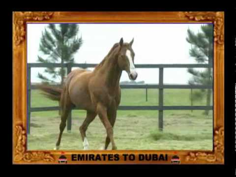 EMIRATES TO DUBAI  internet.wmv
