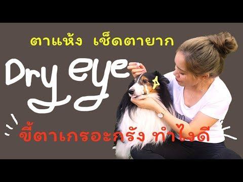 Dry eye สุนัขตาแห้ง ขี้ตาเขียว เช็ดตาสุนัขยังไงดี