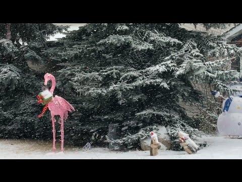 Merry Christmas Flamingo - m1kTV0199