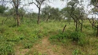 Video of Agricultural farmland for sale in Kajiado at Lorngosua near Bisil