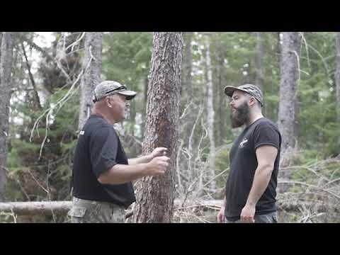 appat à ours pour chasseur à l'arc