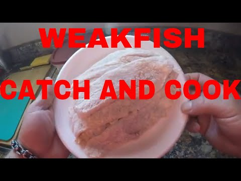 WEAKFISH (YELLOW TROUT) CATCH AND COOK