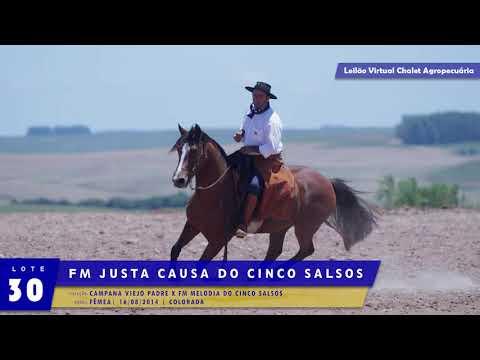 LOTE 30 - FM Justa Causa dos Cinco Salsos
