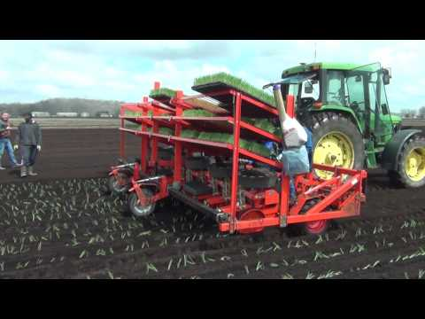 12 ROWS ONION TRANSPLANTER ONTARIO CANADA