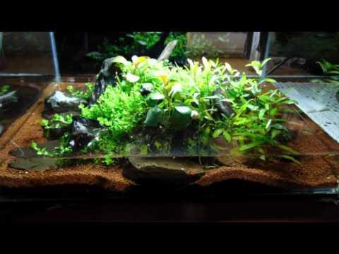 Akvarisztika kezdőknek 4 (Nyílt, vagy zárt legyen az akvárium)