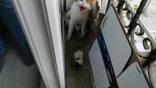 Yavrusu Ölen Anne Kedi Ölü Yavruyu Vermiyor