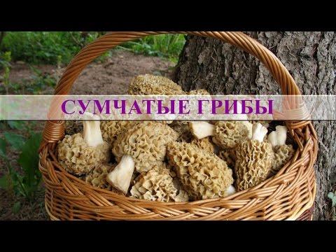 Грибы съедобные фото грибов с названиями, описание