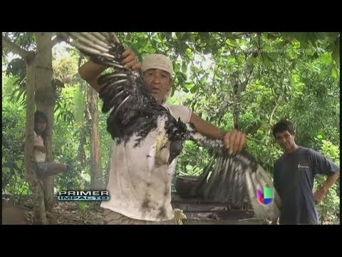 Micro documental Lonquimay from YouTube · Duration:  3 minutes 29 seconds