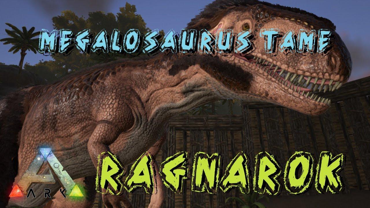Ark Survival Evolved Megalosaurus Tame Ragnarok S1e13 Youtube Der megalosaurus ist ein nachtjäger. ark survival evolved megalosaurus tame ragnarok s1e13