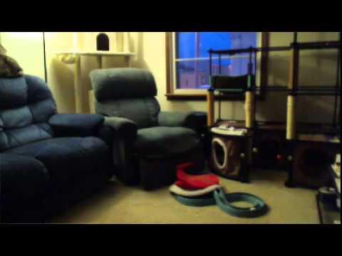 Living Room Cam - YouTube