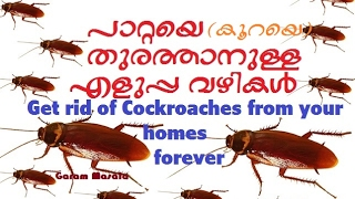 Get rid of Cockroaches from your homes forever  പാറ്റയെ തുരത്താനുള്ള എളുപ്പവഴികൾ