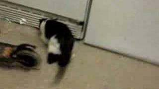 wild devil cat-episode 1
