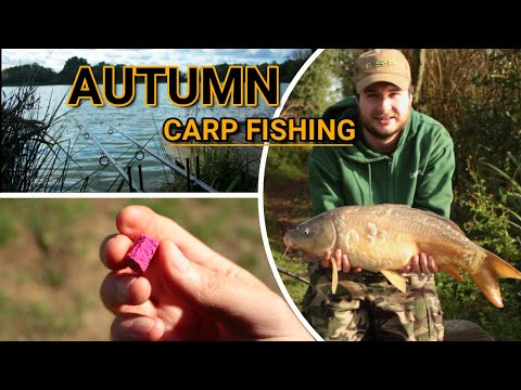 **AUTUMN CARP FISHING** Farm Reservoir: Session 2 ꟾ October 2020