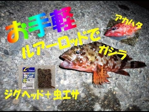 ジグヘッド+虫エサで超簡単根魚(ガシラ・カサゴ)釣り【釣り方説明しながらHIT!】