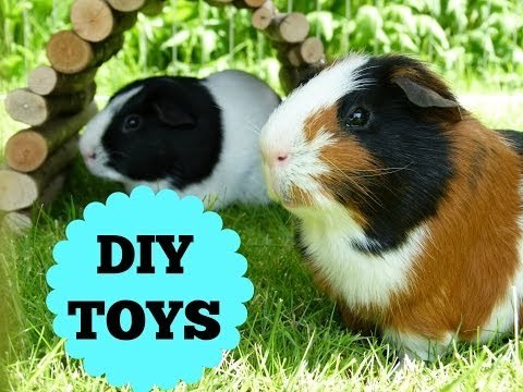 The Guinea Pigs DIY Toys