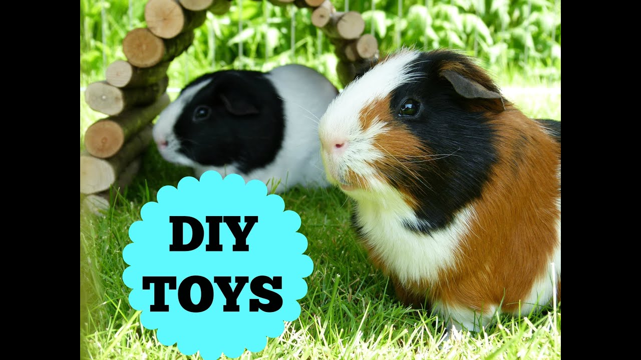 the guinea pigs diy toys youtube