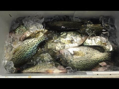 Crappie Fishing For Specks At Reelfoot Lake