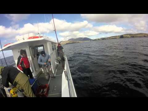 Donegal Deep Sea Fishing, Polock, Mackerel, Cod