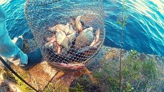 Рыбалка на фидер (донка). Ловля леща на Иваньковском водохранилище