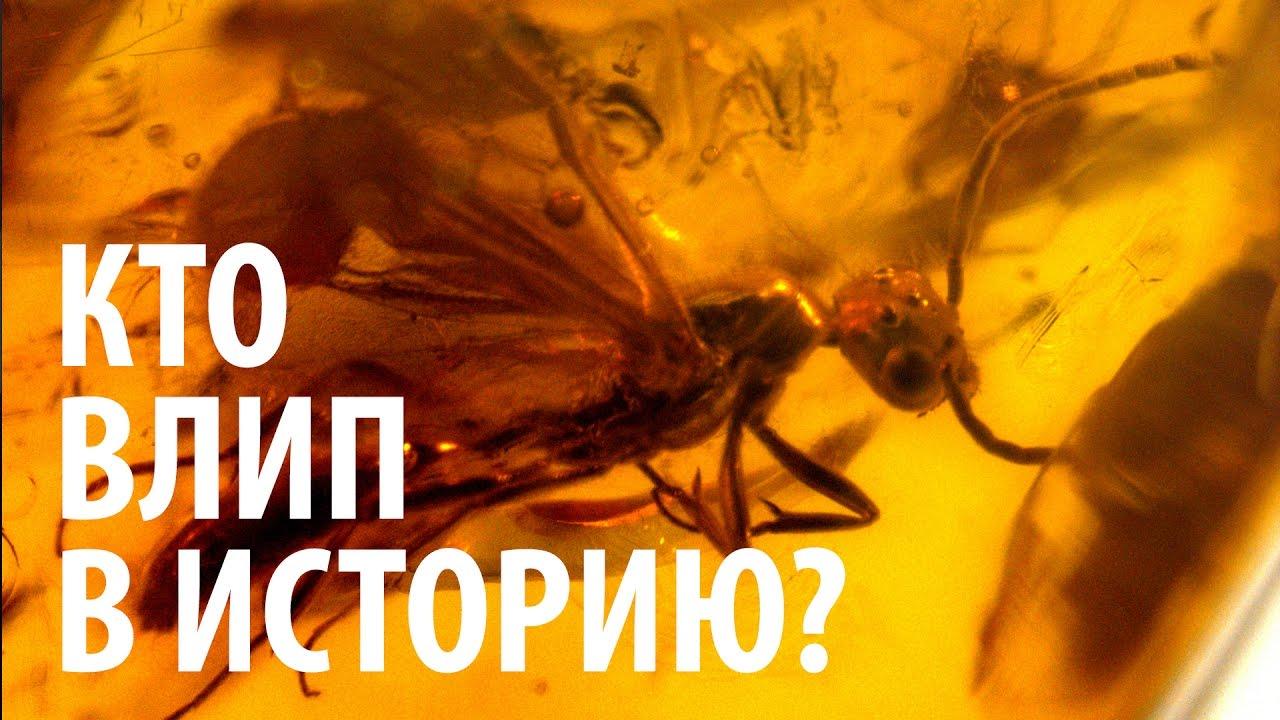 КТО ВЛИП В ИСТОРИЮ? Ярослав Попов | Палеонтологические истории #005