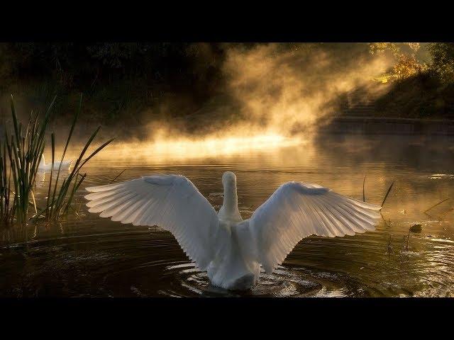 Смотреть видео Танец  маленьких лебедей( Remix) - DJ Sebastien