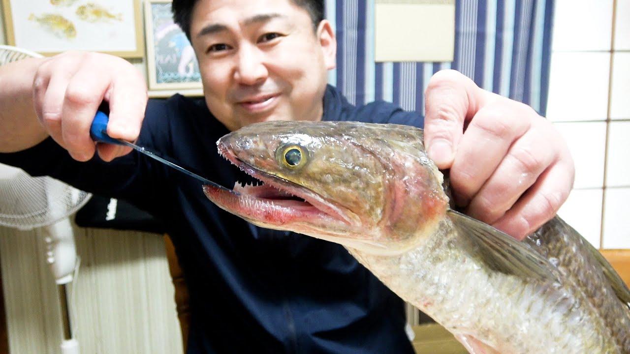 ギザギザの歯!怖い顔のお魚だけど味は格別です!おすすめの食べ方をご紹介!!