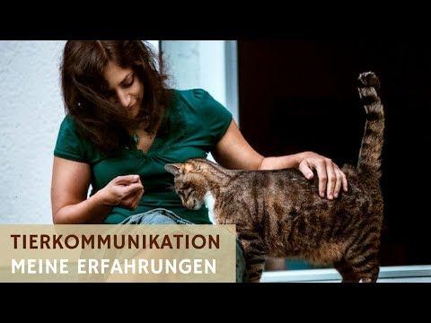 Tierkommunikation (Tiergespräche) - Meine Erfahrungen (Podcast #14)